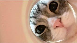 コップに顔をつっこむ猫