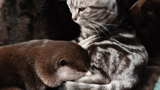 Can cats and otters get along? Watch this video for the answer [Otter life Day 182]
