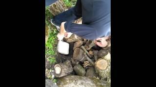 посадка грибов ВЕШЕНКА(