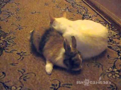 Cat Meets Bunny (Знакомство с кроликом)