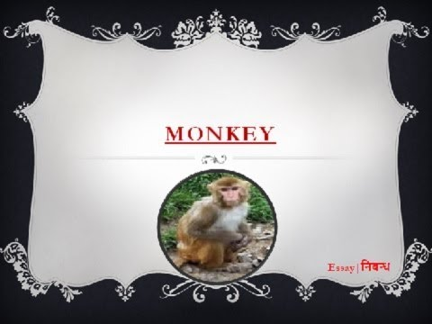 essay on monkey