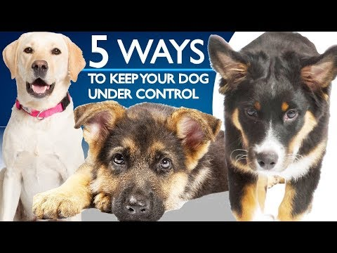 5 Ways To Keep Your Dog Under Control!