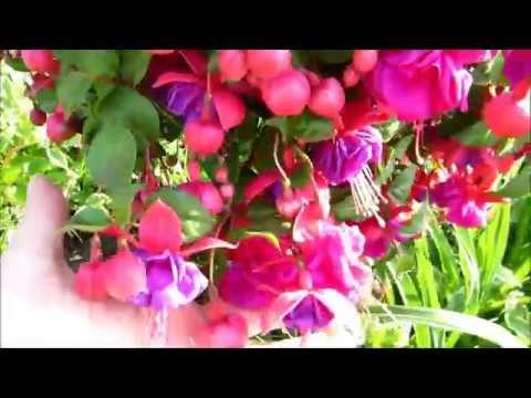 🌴🐤✿Updated flower garden tour in the beautiful golden hour 6/1/2016✿🐤🌴