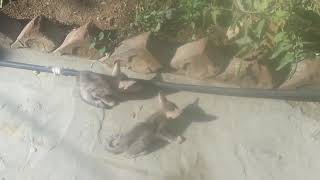 Funny Cats Fighting   Cats Funny Fighting For Food   Travel Pakistan With Us
