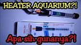 Cara Pakai Heater Aquarium Yang Benar Bila Salah Bisa Fatal Youtube