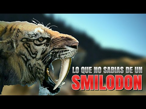 Lo Que No Sab 237 As De Un Smilodon Tigre Dientes De Sable