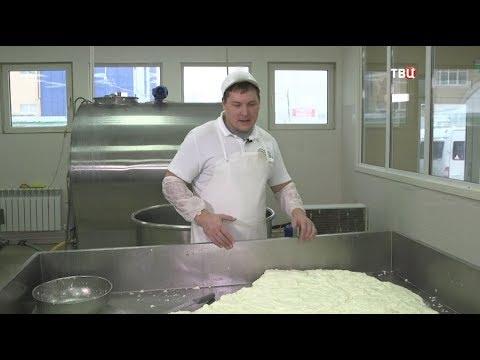 Сыр моцарелла. Естественный отбор