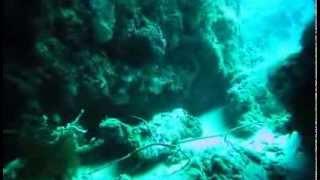 Seaholic Dive Team at Dive & Trek