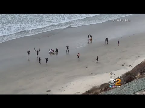 Teen Seriously Hurt After Being Bitten By Shark In Encinitas