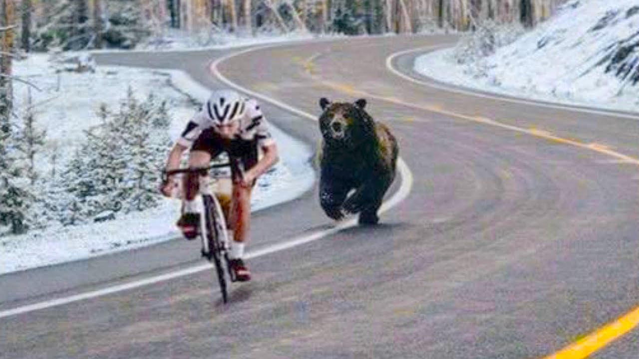 15 Times Animals Chased Cyclists