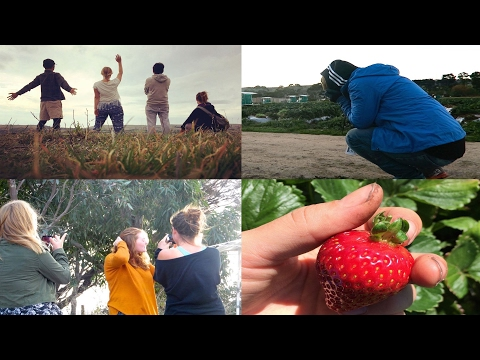THE STRAWBERRY CHRONICLES I South Australia