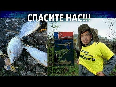 """На Дальнем Востоке китайцев.net / """"доступная рыба"""" в Амурске / народ против министра"""