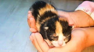 Дети и котята или  Куки в детстве ! Видео для детей про котиков