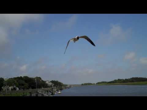 Fly high, Seagull