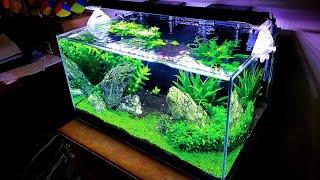 How I Maintain my 20 Gallon Planted Aquarium