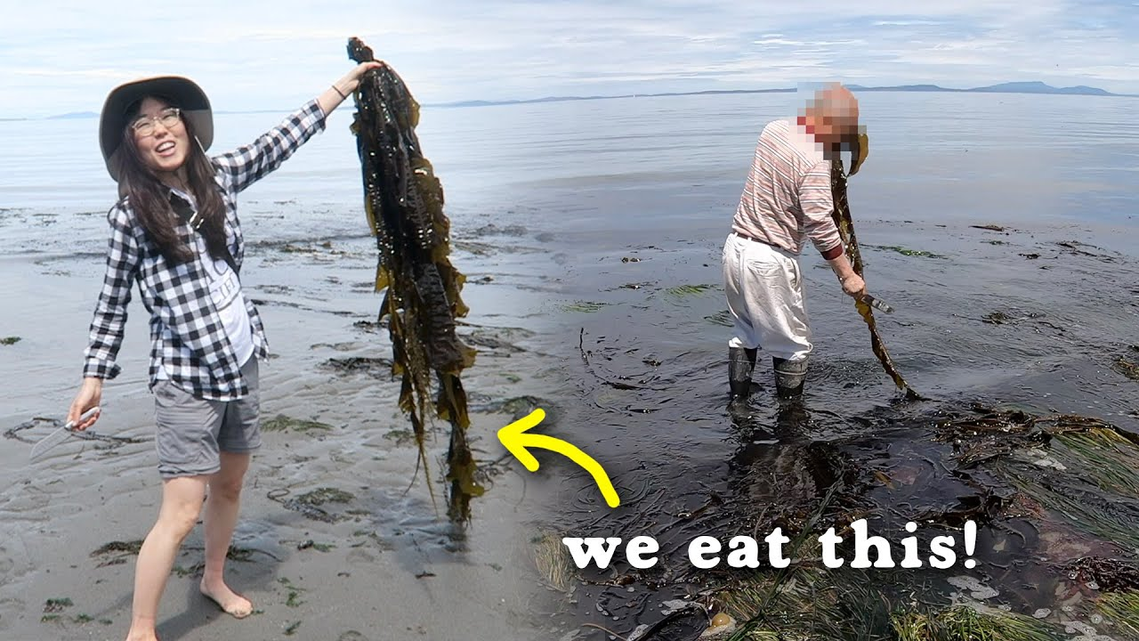 COASTAL FORAGING 🦀 Butter Clams, Mussels, Seaweed, Crabs! CATCH & COOK Kelp Soup & Chowder