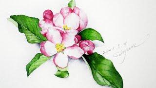 [베리현 수채화 Short]사과꽃 그리기| Waterc…