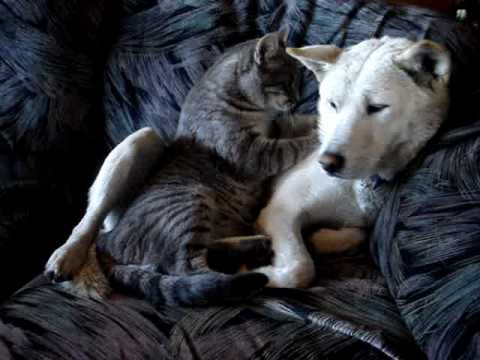 Cat Gives A Dog Hypnotherapy