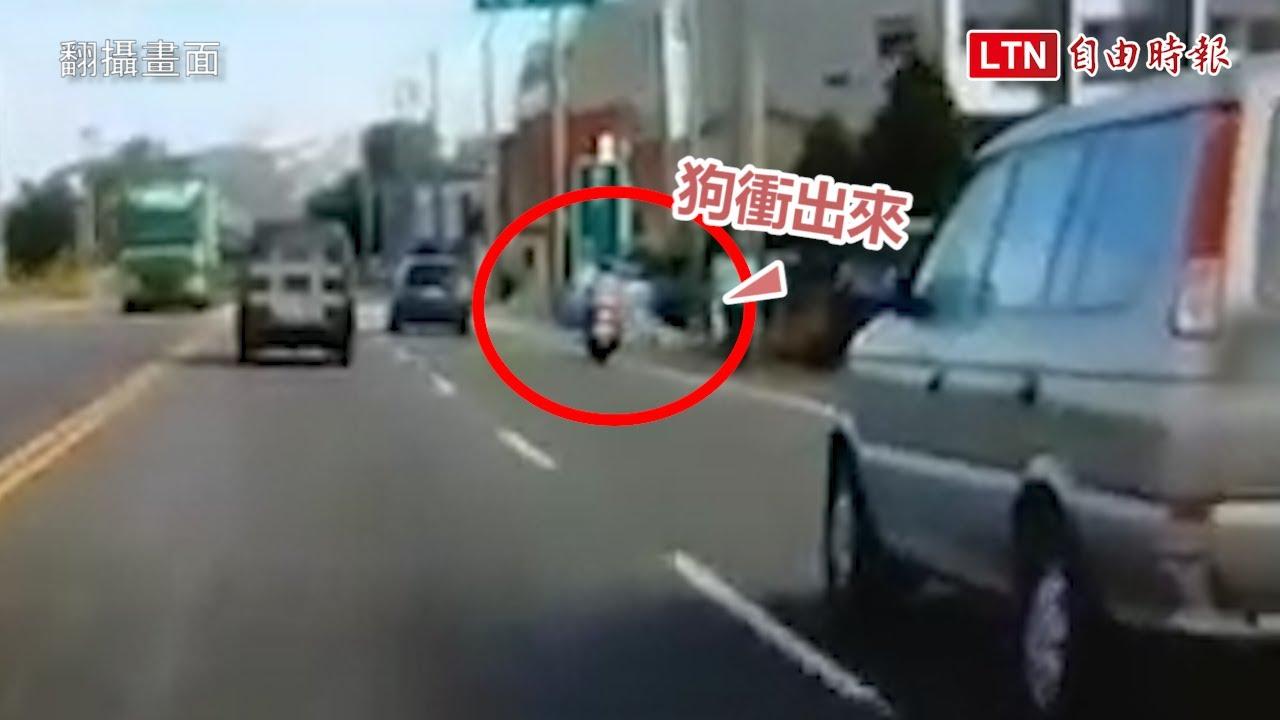 寵物狗未綁尿急衝入馬路 外籍女騎士撞上慘「犁田」