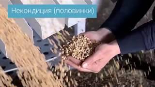 Очистка гороха от зерновых примесей сепаратором АСМ - машина для очистка гороха от зерновых примесей