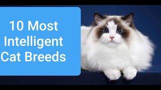 10 Most Intelligent Cat Breeds