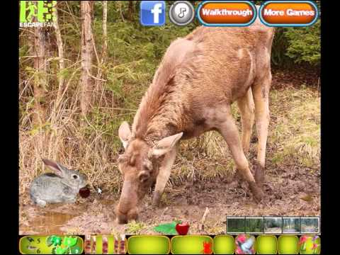 онлайн казино secret forest walkthrough