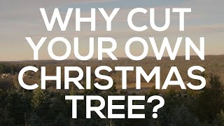 Why Cut Your Own Christmas Tree?
