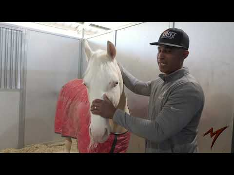 COME CHECKOUT MY BARN AND MEET SOME OF MY HORSES!!!  Vlog #1