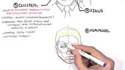 hqdefault - Academy Depression Headache Neurology Neurology Tietjen Woman