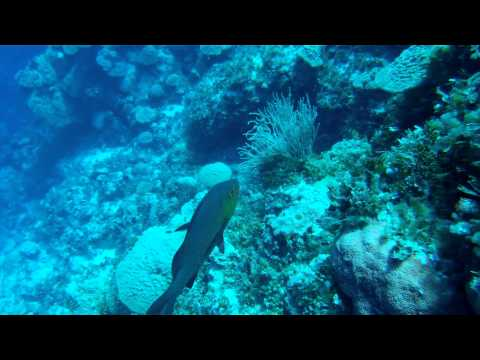 Freediving and Scuba Diving in the Marshall Islands 2014