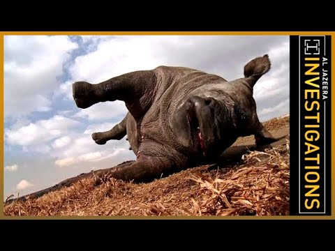 The Poachers Pipeline L Al Jazeera Investigations