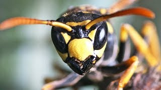10 Most BRUTAL Insect Stings