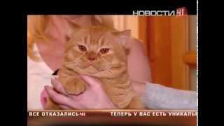 В суд из-за котенка