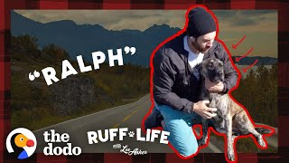 Huge Mastiff Mix Has The BEST Reaction To Getting Adopted | Ruff Life With Lee Asher