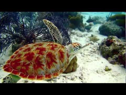 Diving & Exploring the Bonaire Marine Park, part 2