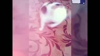 Прикрепил кошке на хвост прищепку (ей не больно)