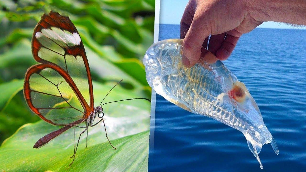 7 حيوانات شفافة لم تكن تعرف بوجودها