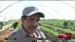 Video Strawberry farmers in Morocco showcase their harvest download MP3, 3GP, MP4, WEBM, AVI, FLV Mei 2018