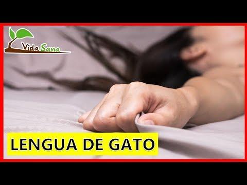 LENGUA DE GATO - La Posición Que Genera Mas Placer A La Mujer - Vida Sana