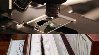 Begini Penampakan Rambut Baginda Nabi Muhammad SAW Diperbesar dengan Mikroskop