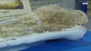 هيئة المساحة الجيولوجية السعودية تعلن عن آخر اكتشافاتها