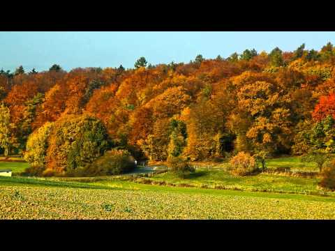 Weilmuenster Weil Hessen Germany - autumn, Old Town, forests, Pilze, mushrooming, YouTube