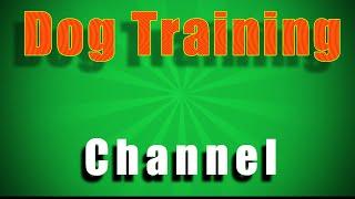 Dog Training For Beginners Tips & Techniques for Beginners YT