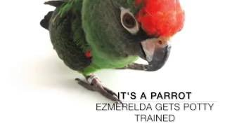 Little Parrot Gets Potty Trained