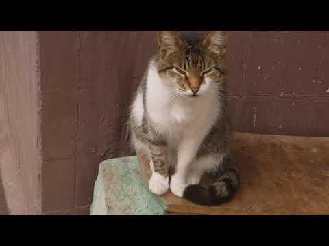 Cat, Person, Animal