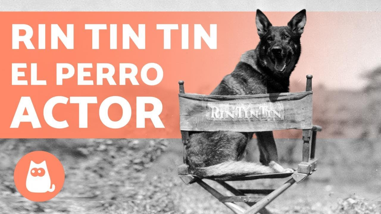 El PERRO que casi GANÓ un OSCAR 🎥🐕 (Rin Tin Tin)