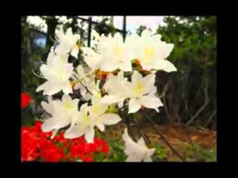 Krisyanto Mawar Merah cover   YouTube
