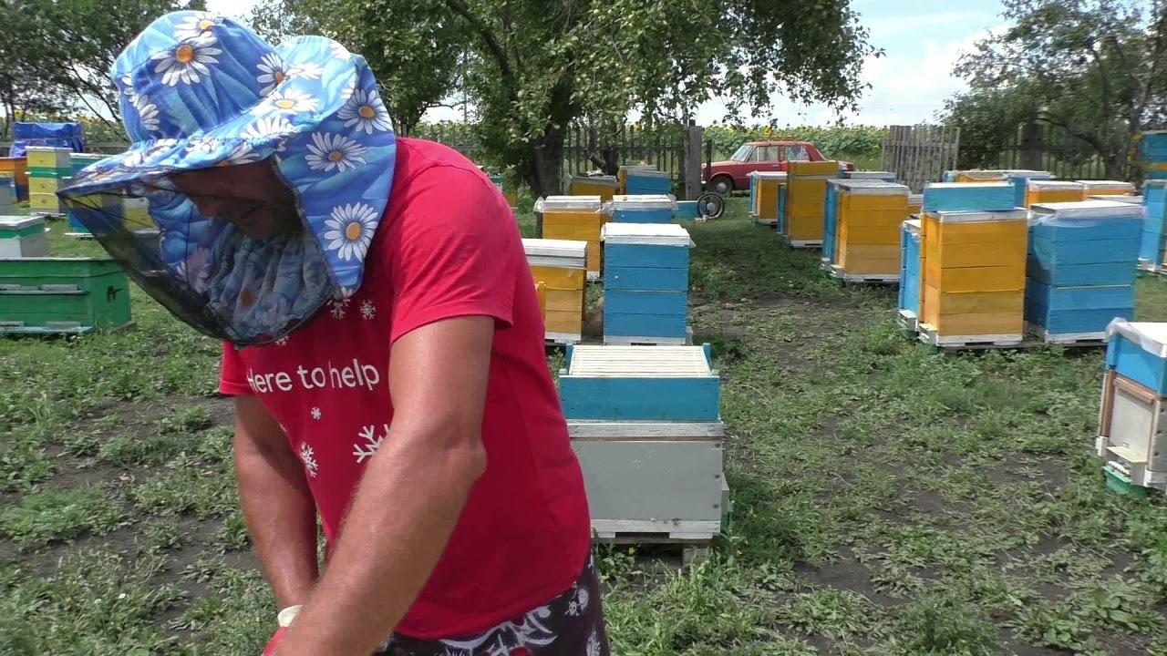 улей многокорпусный на 145 содержание пчел