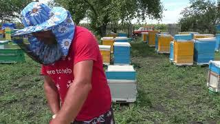 Содержание пчёл 300 +145