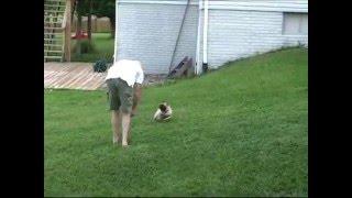Pug Evades Capture!!! Funny! High Definition!